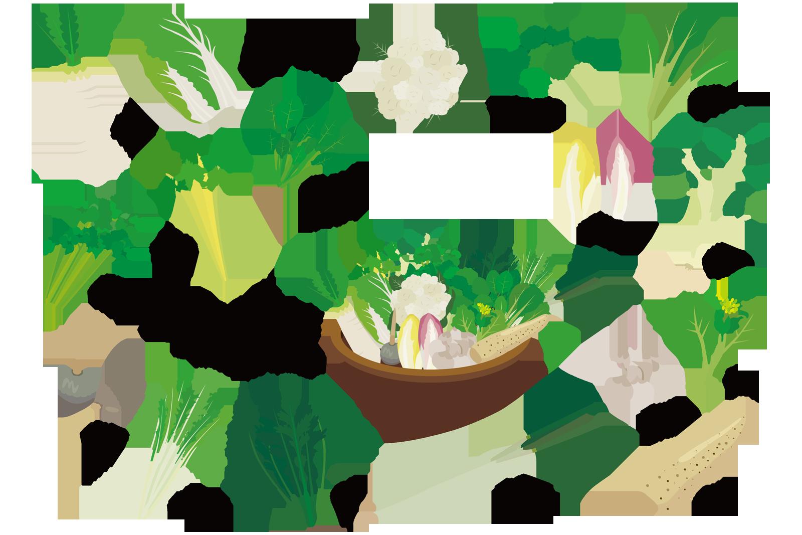 冬野菜_ブロッコリーはうつ病や成人病に良い